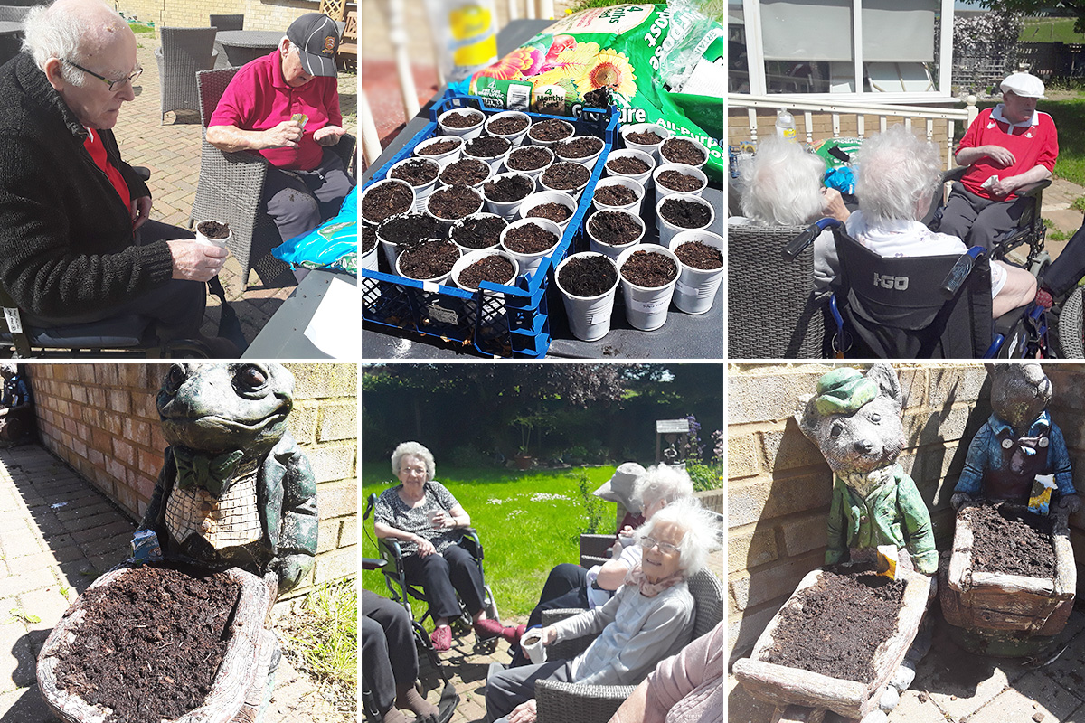Silverpoint Court Residential Care Home residents plant sunflower seeds